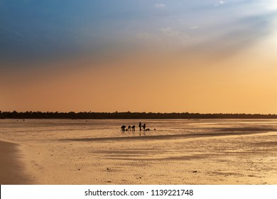 Silhouette of cocklers harvesting cockle at the beach in the island of Orango at sunset, in Guinea Bissau. Orango is part of the Bijagos Archipelago; Concept for travel in Africa and summer vacations