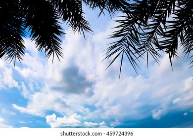 Silhouette a Coconut leaf on blue sky cloudy for landscape sunse