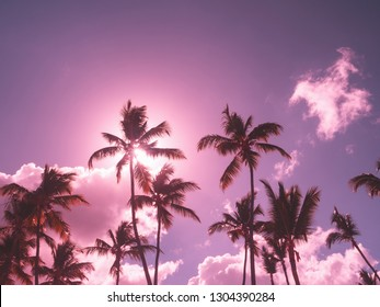 Silhouette of coconut palm trees on sky background with sun down, copy space