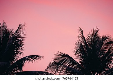 Silhouette Coconut Palm Trees on Burning Sunset Twilight Sky at Tropical Beach Vintage Warm Toned Abstract Background for Travel, Summer, Vacation, Adventure , Relaxing Holidays Concept and Copy Space