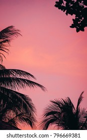 Silhouette Coconut Palm Trees on Burning Sunset Twilight Vanilla Sky at Tropical Beach Vintage Toned Abstract Background for Travel, Summer, Vacation, Adventure, Relaxing Holidays Concept Copy space