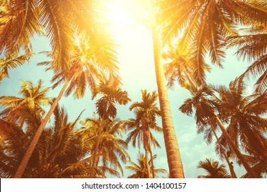 Silhouette coconut palm trees with sunset colorful vitage retro fade tone and sun flare background.
