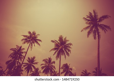 Silhouette coconut palm trees - Tropical aloha summer beach holiday vacation concept, Color tone effect