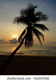 Silhouette of coconut at sunrise on the beach.