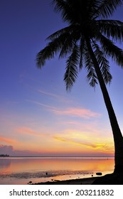 Silhouette Of Coconut Tree During Sunrise/Sunset