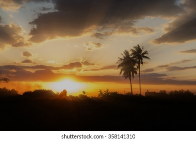silhouette coconut trees, backlit with sunray