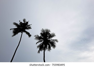 Silhouette of coconut trees at a beach.