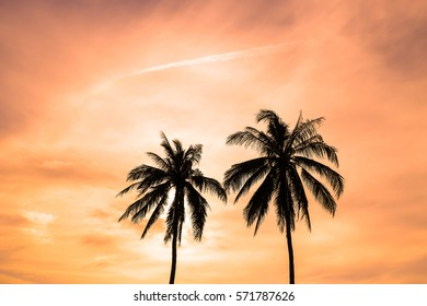 silhouette coconut trees with clouds and air jet