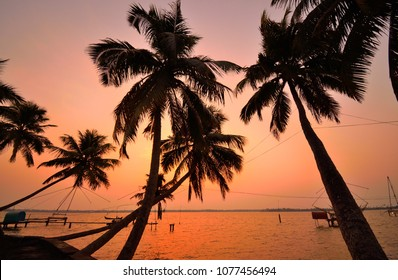 Silhouette of coconut trees in kumbalangi, a suburb of cochin during sunset.
