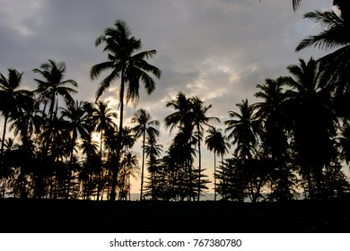silhouette of coconut trees are planted in garden when sunset