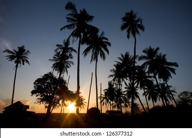 Silhouette of Coconut Trees With Sunset  and Clear Sky