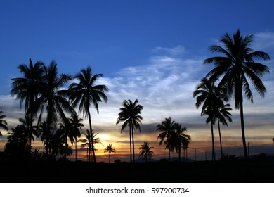 Silhouette coconut trees in twilight sky.