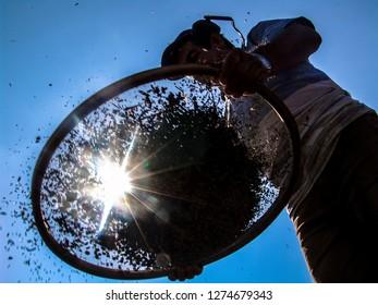 silhouette of coffee harvester in Minas Gerais State, Brazil