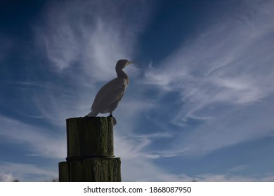 Silhouette of cormorant on piling in harbor of Volendam, Netherlands