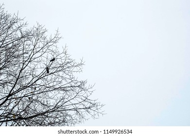 Silhouette of a couple pigeons perch in the park