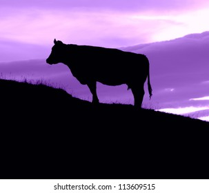Silhouette Of A Cow On A HIll With A Purple Sky With Copy Space