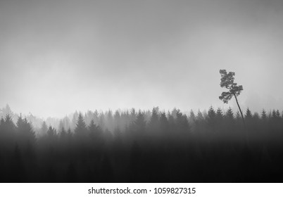 silhouette of dark forest in muted light