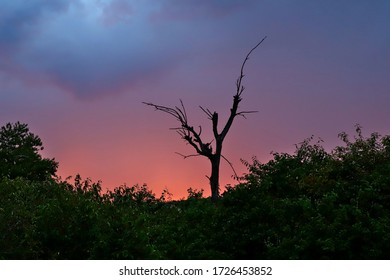 Silhouette of a dead tree against the sunset with dramatic clouds overhead in the Masai Mara, Kenya (landscape, colour)