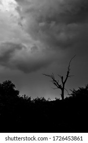 Silhouette of a dead tree against the sunset with dramatic clouds overhead in the Masai Mara, Kenya (portrait, monochrome)