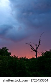 Silhouette of a dead tree against the sunset with dramatic clouds overhead in the Masai Mara, Kenya (portrait, colour)