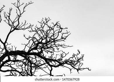 Silhouette dead tree and branch isolated on white background. Background for death, hopeless, despair,sad, and lament concept. Halloween night. Dramatic horror night on Halloween day.  Grief abstract.
