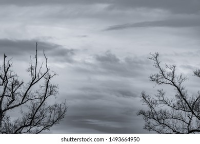 Silhouette dead tree and branch on grey sky background. Black branches of tree. Nature texture background. Art background for sad, dead, lonely, hopeless, and despair. Halloween day background.
