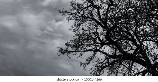 Silhouette dead tree and branch on grey sky background. Black branches of tree. Nature texture background. Art background for sad, death, lonely, hopeless, and despair. Halloween day background.