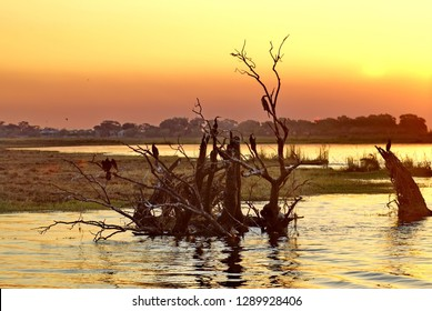 Silhouette of a dead tree in the Chobe River at sunset in Chobe National Park, Botswana