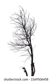 Silhouette of dead tree isolated on white background