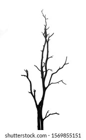 silhouette dead tree isolated on white background