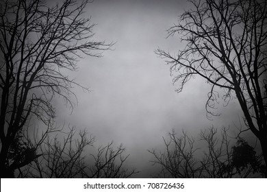 Silhouette dead tree at night for Halloween background.