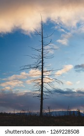 Silhouette of a dead tree on a background of blue sky with clouds, September 6, 2018, Norilsk