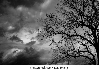 Silhouette dead tree  on dark dramatic sky background for scary or death. Halloween night. Hopeless, despair, and lament concept. Scary forest. Horror night on Halloween day background.