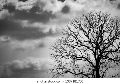 Silhouette dead tree on dark dramatic sky background for scary or death. Halloween night. Hopeless, despair,sad and lament concept. Scary forest. Dramatic horror night on Halloween day background.