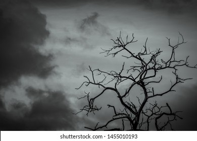 Silhouette dead tree on dark dramatic sky background for scary or death. Leafless tree branch. Hopeless, despair,sad and lament concept. Scary forest. Dramatic horror night on Halloween day.