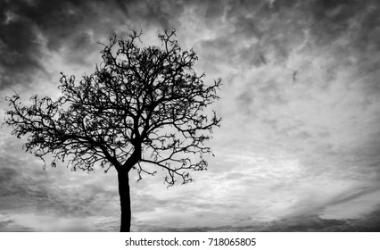 Silhouette dead tree  on dark dramatic sky background for scary or death