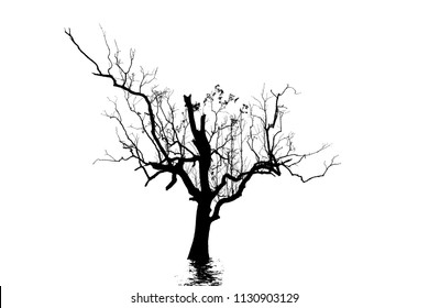 Silhouette of the dead tree with shadow ripple on the white background.