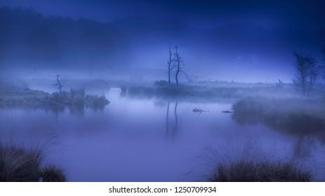 silhouette of dead trees in misty fen and reflecting in the water in dark blue spooky atmosphere in Hatertse Vennen, Nijmegen, Netherlands