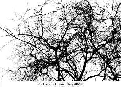 Silhouette dead wood branches black and white