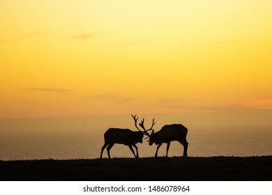 silhouette of deer on beautiful sky background