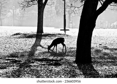 silhouette of deer in the park at early morning, Nara, Japan