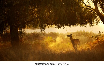 A silhouette of a deer standing user a willow tree