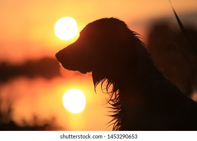 Silhouette of a dog against the sky and the sun at sunset by the lake
