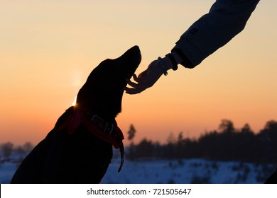 silhouette of a dog and man hand. abopt a dog concept