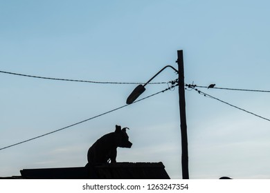 Silhouette of dog on roof with askew lamp is show on his head