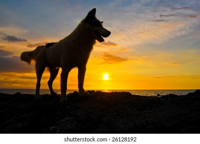 silhouette of a dog at sunset