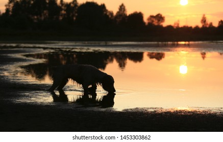 Silhouette of a dog at sunset by the lake with reflection in the water