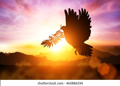 Silhouette of Dove carrying olive leaf branch .Freedom concept  and international day of peace 2017