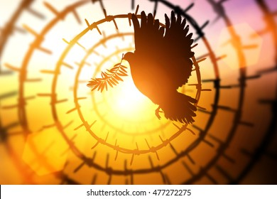 Silhouette of Dove carrying olive leaf branch flying in Circle barbed wire on sunset background for freedom and international day of peace 2016