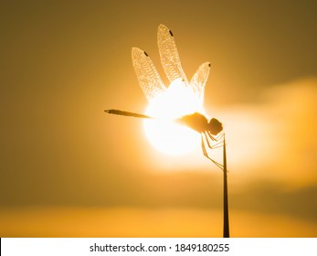 The silhouette of Dragon Fly on tree branch during the sun,Damselfly,Insects,Macro dragonfly,